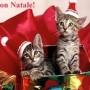 Le più belle frasi di auguri di Natale, Capodanno e Befana