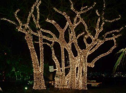 Luci da esterno per albero di natale come mettere le luci di