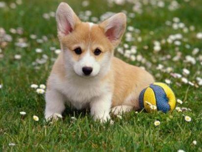 Addestramento ed Educazione Cane Addestramento ed Educazione Cane - Educazione e Addestramento del cane