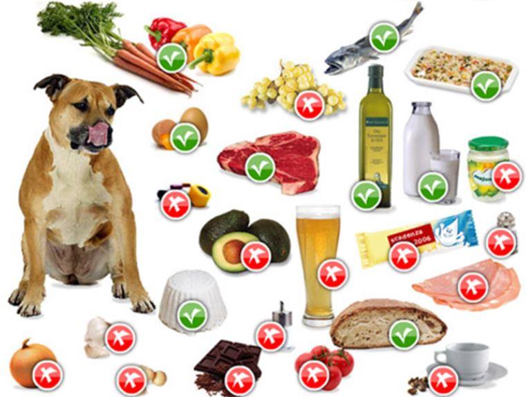 Come Alimentare e tenere un Cane in casa - The house of blog