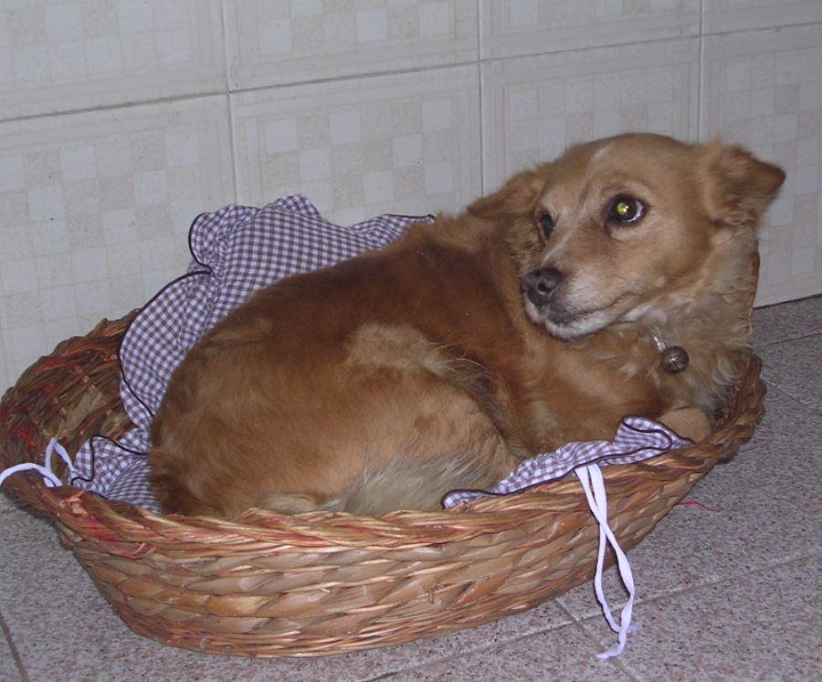 Cani Per Appartamento Piccola Taglia ~ duylinh for